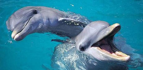 Bottlenose Dolphins Have Self-Awareness