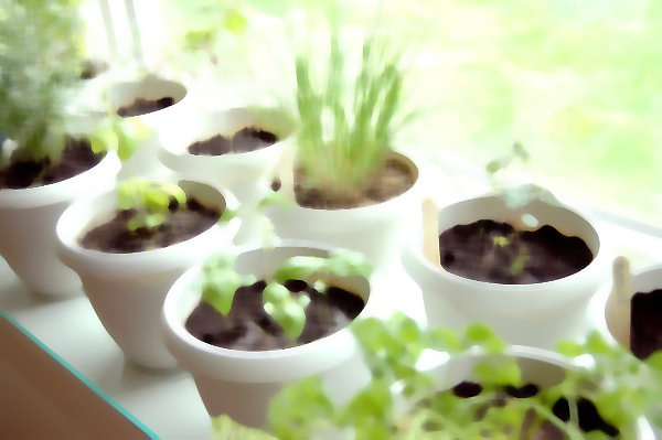 How to Grow Your Own Dream Herb Garden