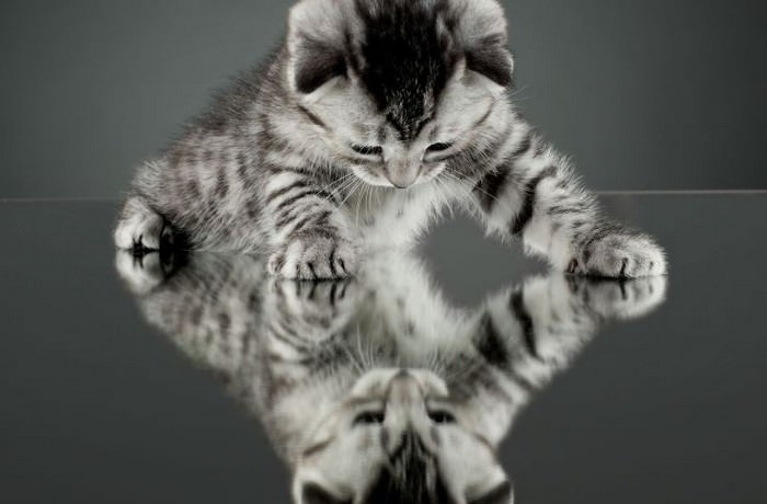 A Kitten Blatantly Misusing a Mirror Portal