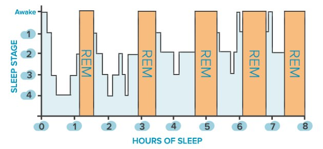 The Stages of REM Sleep