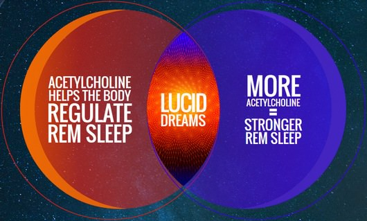 Acetylcholine and Lucid Dreams