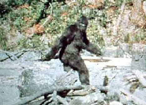 The Unexplained Mystery of Bigfoot