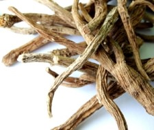 buy silene capensis