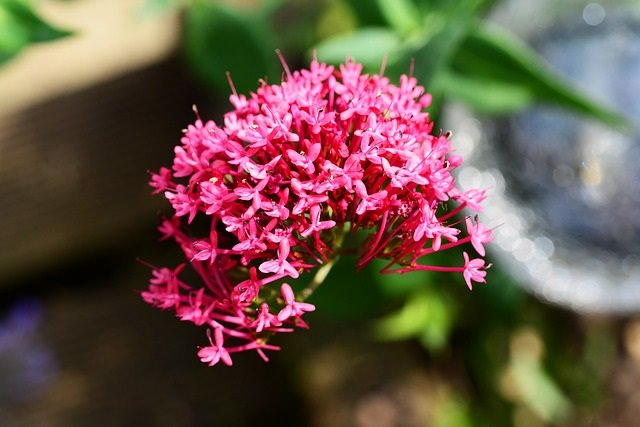 valerian root high from dreams
